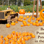 Best Pumpkin Patches in the West